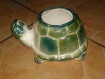 Tortuga con Hoja